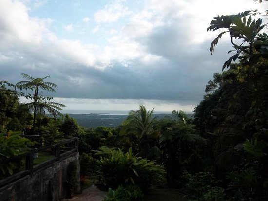 Rainforest Inn: View from back patio