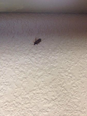 Extended Stay America - Chesapeake - Greenbrier Circle : DEAD BED BUG FOUND CRUSHED ON THE WALL