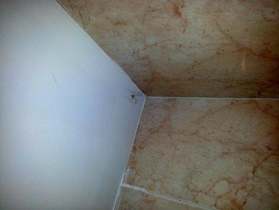 Viva Menorca: Araña en el baño