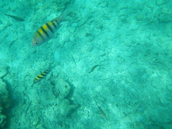 TRYP Cayo Coco: nage avec les poisson