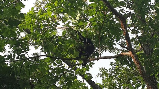 Hotel Luna Azul: Monkey outside hotel
