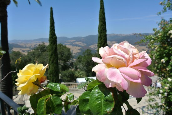 Hearst Castle: Mountain Views