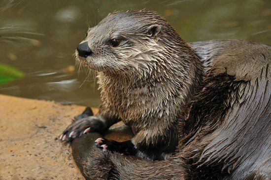 Tallahassee, Floryda: Otters are definitely one of our visitors' favorite animals!