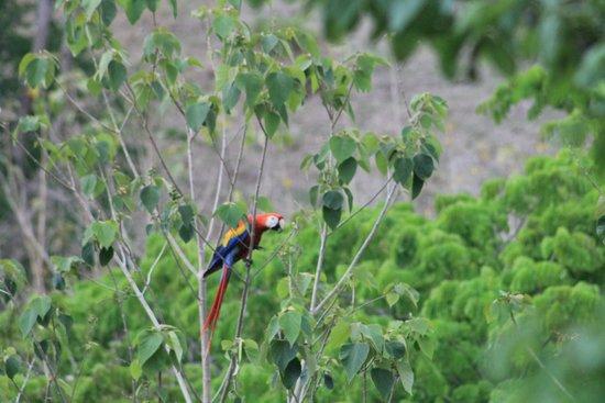 Hotel Cerro Lodge: Macaw feeding
