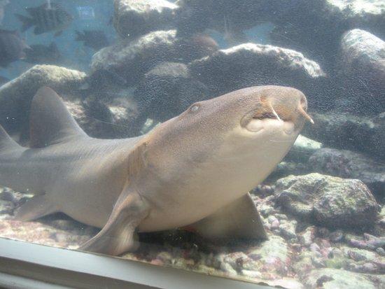 Dolphin Academy Curacao: Un tiburon que posa a cámara