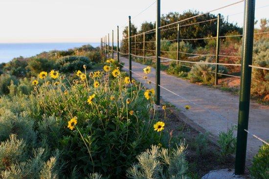 Dana Point Preserve at Sunrise