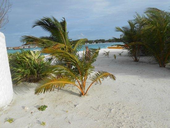 """Cinnamon Dhonveli Maldives : """"Kinderstube"""" der Palmen."""
