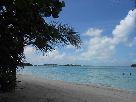 Cinnamon Dhonveli Maldives : Der Badestrand ist einfach ein Traumstrand