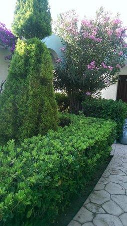 Blue Horizon Hotel: растительность у бунгало