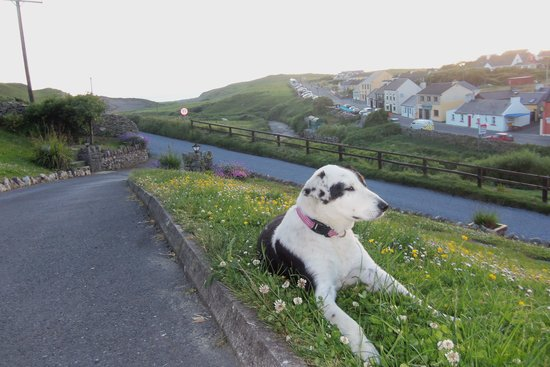 Sea View House Doolin : The house dog waiting for Darra.