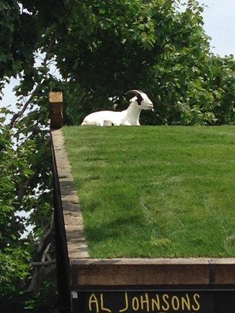 Al Johnson's Swedish Restaurant & Butik: Goat!