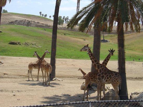 San Diego Zoo Safari Park: dos equis