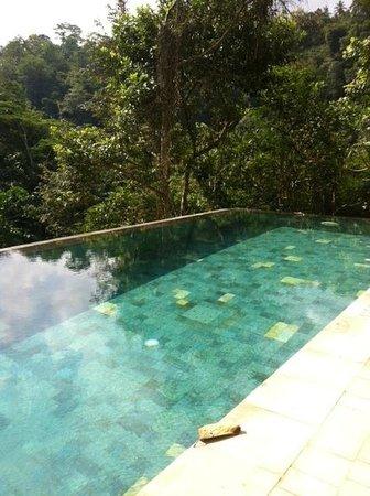 Ayung Resort Ubud: La piscina sobre el bosque