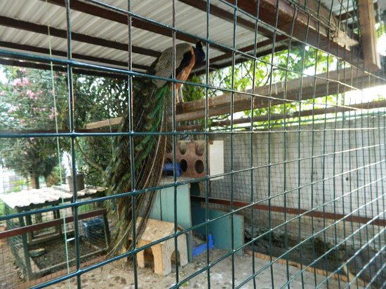 Club Sun Heaven Famıly&SPA: Там живет павлин с павами