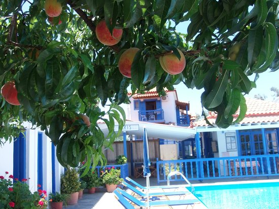 Haris Studios & Apartments: View from the peach tree