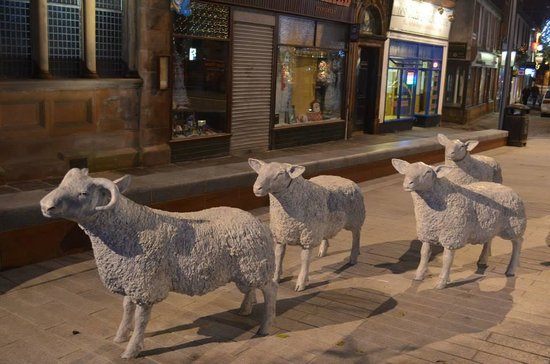 Lockerbie, UK: Our new Ornamental Sheep in the High Street