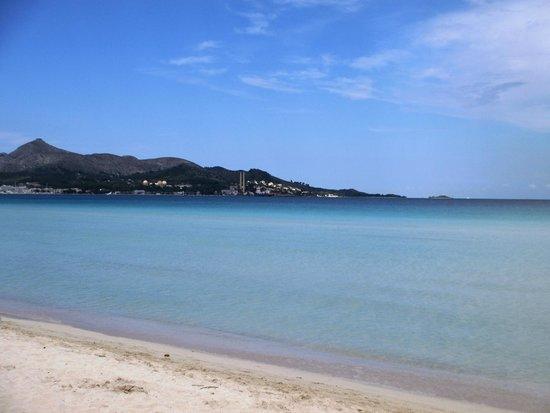 Playa de Alcudia : пляж с соснами