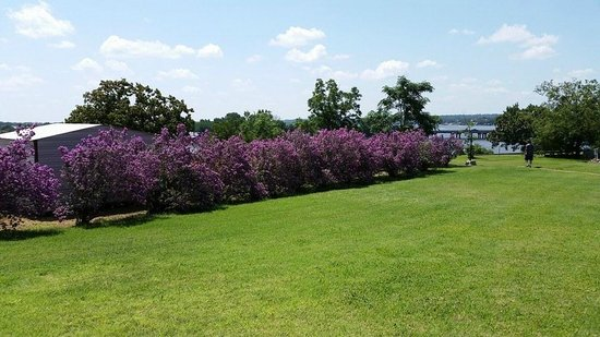 Baker St. Harbour, Waterfront Bed and Breakfast : Texas Sage Bush in Full Bloom view towards Lake Granbury