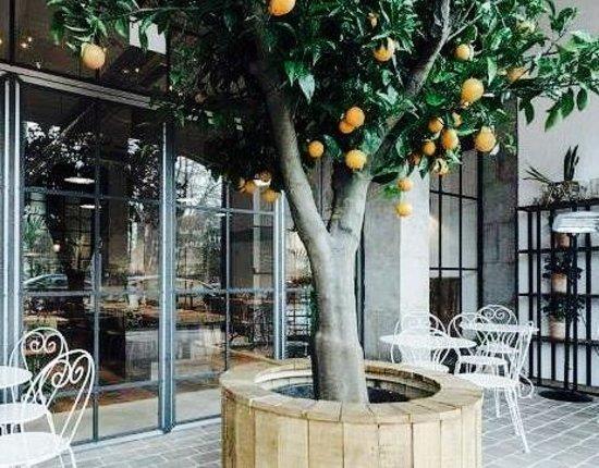 La Terraza Del Restaurante Picture Of El Naranjo De Mama