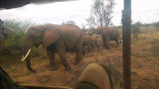 Porini Amboseli Camp : Up close with elephants in the Selenkay Conservancy