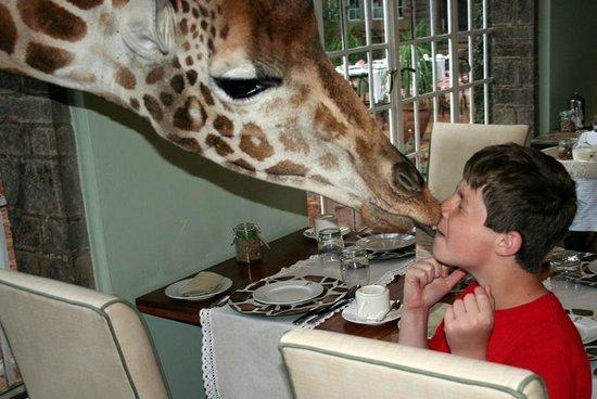 Giraffe Manor : Kissing the giraffe