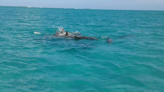 Wild About Dolphins: The Dolphins at play