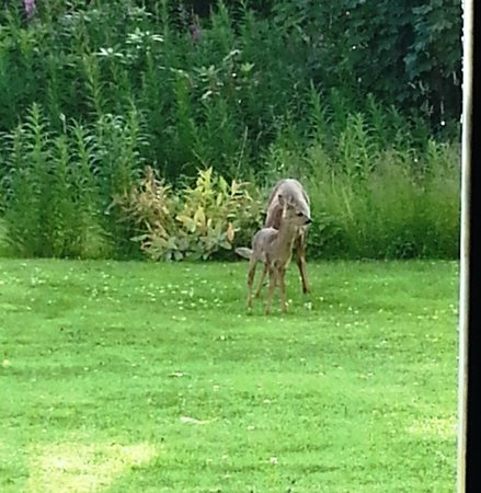 Kincraig Castle Hotel : Couldn't believe this one, One of those Awww moments
