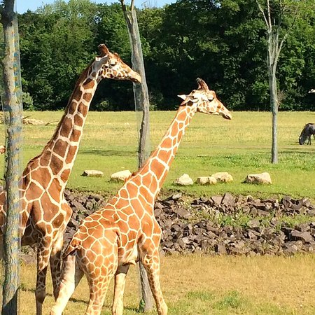 Columbus Zoo: Up close encounters