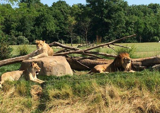 Columbus Zoo: Lounging on the savannah
