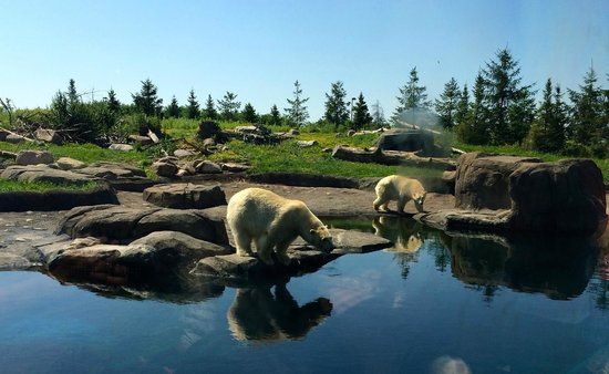 Columbus Zoo: Polar bears in North America