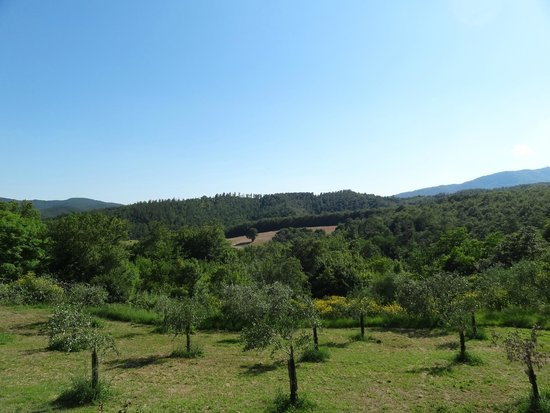 Podere di Santa Maria: View from the swimming pool