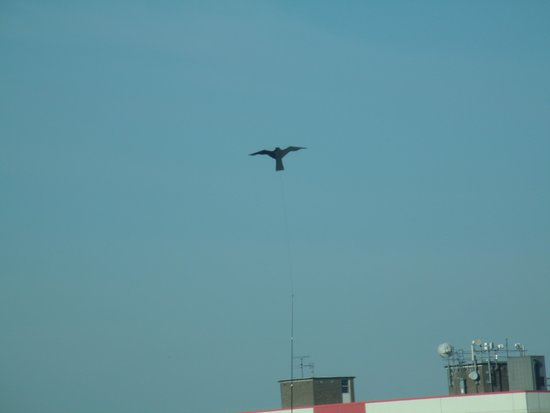 Holiday Inn  Express Hull City Centre: Here birdie,birdie.