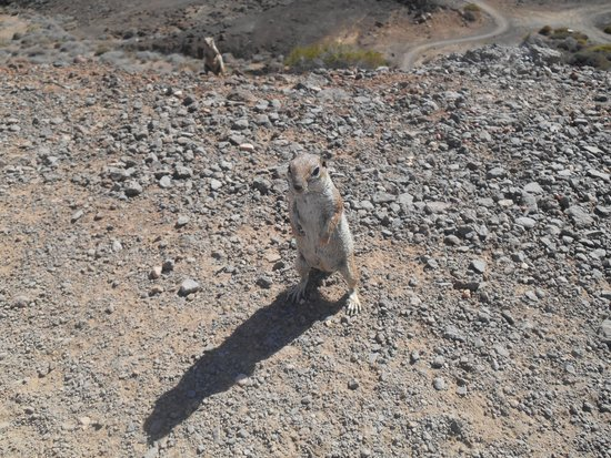 Ambar Beach Resort & Spa: Ecureuils qu'on croise souvent, mignons comme tout !