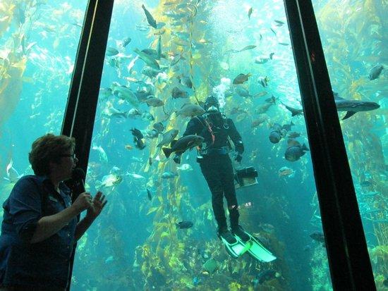 Monterey Bay Aquarium : Feeding of the fish