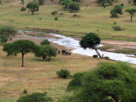 Tarangire Safari Lodge : Elephants Arrive Frist