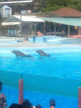 Selwo Marina: dolphins