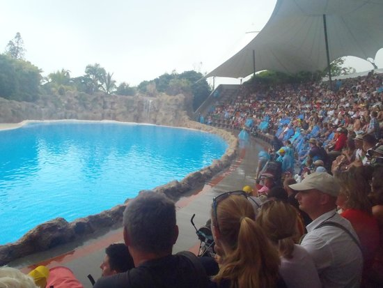Loro Parque : The arena