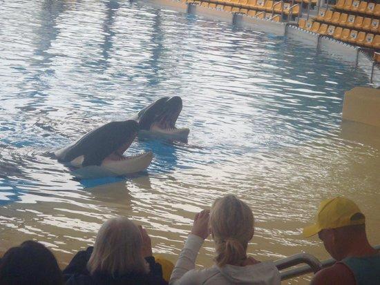 Loro Parque : Orca Ocean