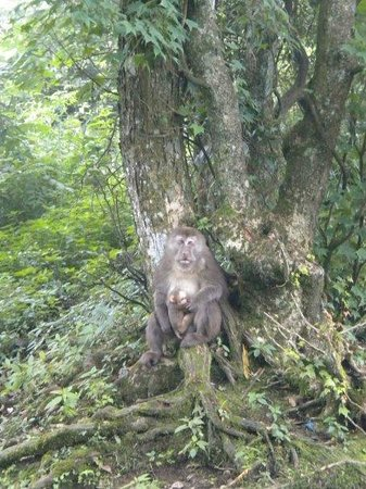 Mt. Emei Natural Ecology Monkey Reserve : big honkin' mama macaque