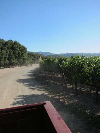 Sustainable Vine Wine Tours: Another great view.
