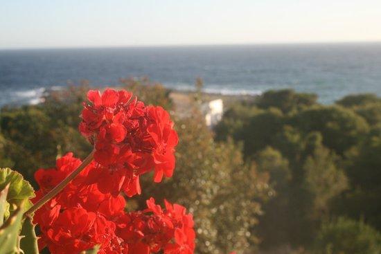Cala D'Aspide Resort: i fiori