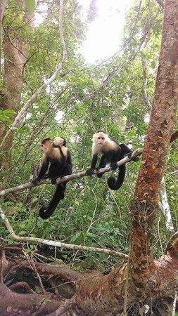 Barefoot Panama: Monkey