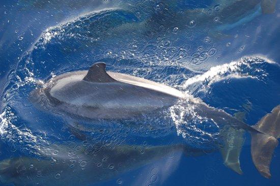 Bussard & Inia Ocean Explorer Tazacorte : einmal Lufthüllen:-)