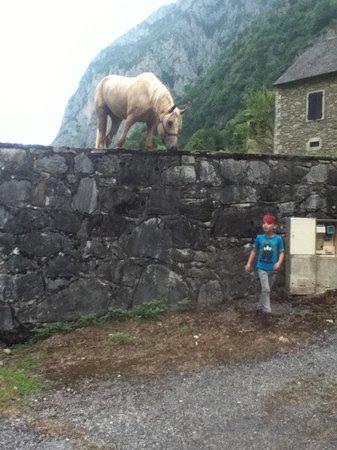 Auberge Cavaliere : un des quelques chevaux du voisinage