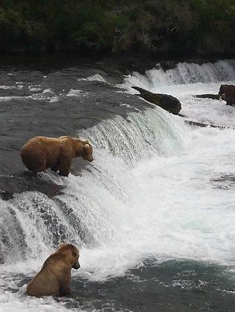 Katmai Adventure Lodge : Bears