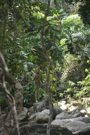 Secret Buddha Garden: В дальнем углу.. вниз по реке