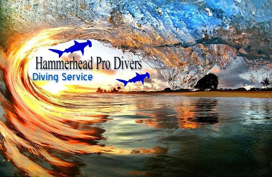 Hammerhead Pro Divers