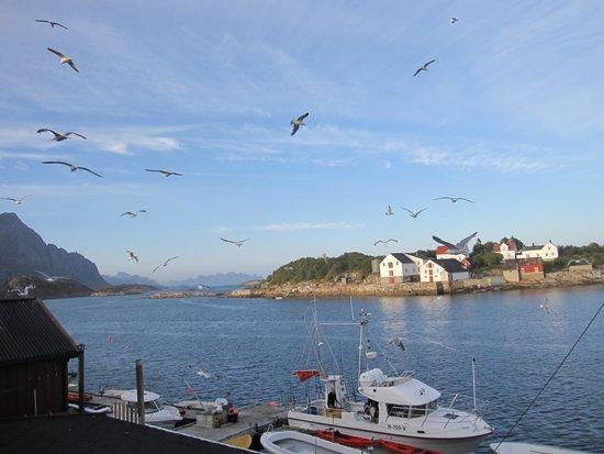 Henningsvaer Rorbuer: Fisketur ble arrangert hver dag