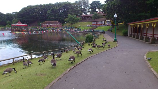 Peasholm Park: Geese & boating lake