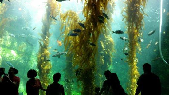 Entrance To The Birch Aquarium Picture Of Birch Aquarium At Scripps La Jolla Tripadvisor